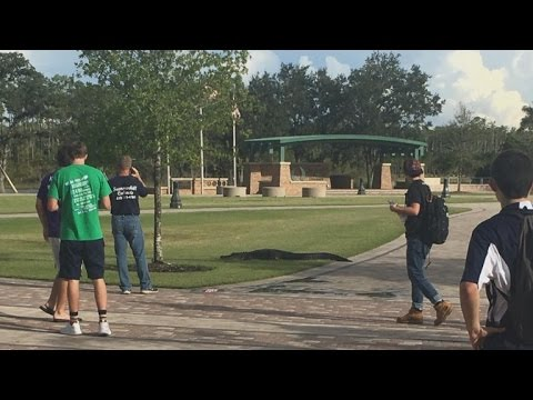 Alligator Takes a Leisurely Stroll on College Campus While Students Snap Photos