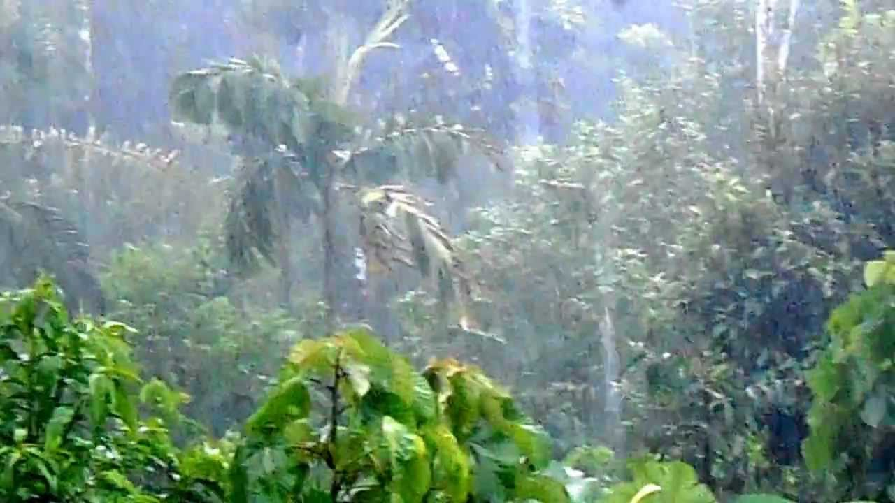 lluvia en la selva pny youtube On fotos de lluvia