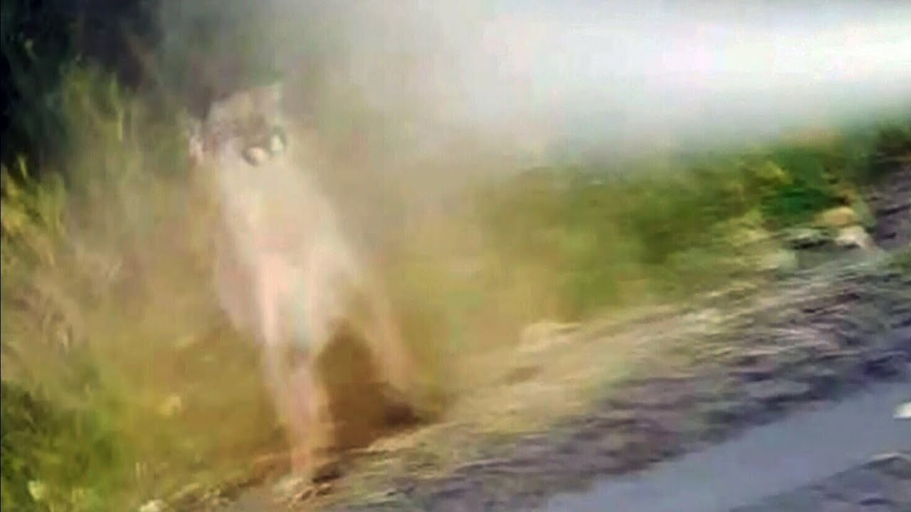 Utah mountain lion video highlights human/wildlife conflicts