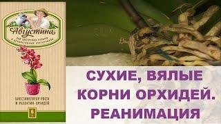 видео Воздушные корни орхидеи фаленопсис
