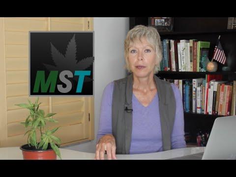 Marijuana Straight Talk - Episode #2