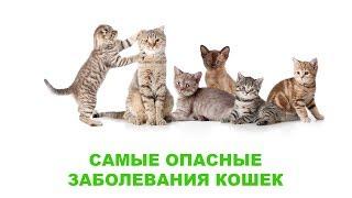 Самые опасные заболевания кошек. Ветеринарная клиника Био-Вет.