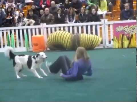 Pet Expo 2015-Hero the Super Collie