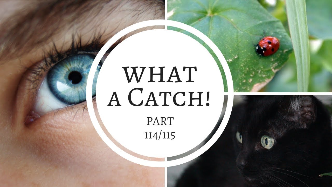 What a Catch! - Parts 114 &115 (A Miraculous Ladybug fanfiction)