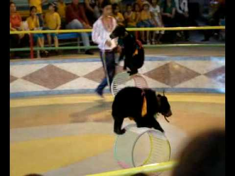 Animal entertainment - Bears