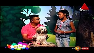 How To Groom A Terrier | My Pet | Kids 1st
