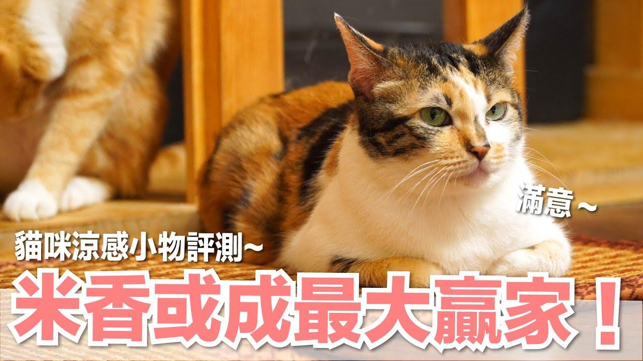 【好味小姐】米香或成最大贏家!貓咪涼感小物評測|好味貓日常EP82