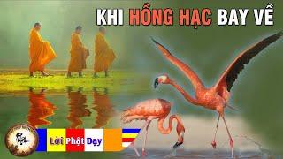 Đọc Truyện Đêm Khuya Phật Giáo - Khi Hồng Hạc Bay Về - Tác Phẩm Được Yêu Thích Nhất | PPNM
