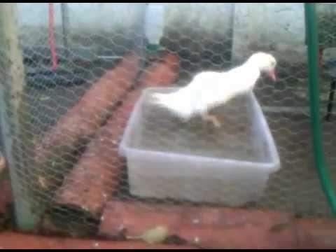 Instalaciones caseras para un pato youtube for Antorchas para jardin caseras