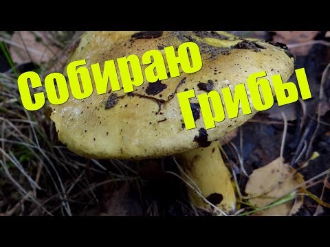 Собираем грибы