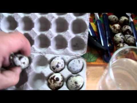 перепелиные яйца вкусно и полезно
