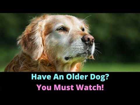 Caring For Senior Dogs. Things You Must Change As Your Dog Gets Older!