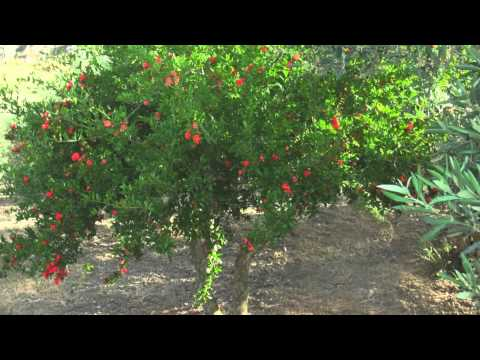 Macala Orchards and Food Products Story