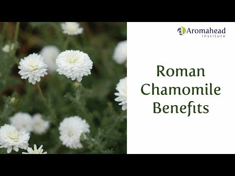 three-roman-chamomile-benefits