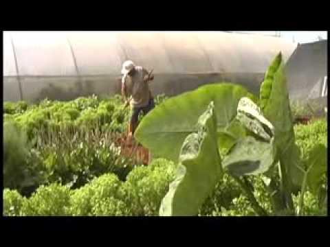 Cuba's Green revolution Part 2