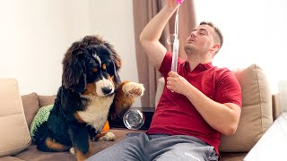 Bernese Mountain Dog Reacts to Bubbles for the First Time!