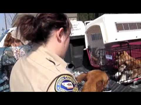Pets Delight at Kern County Animal Shelter