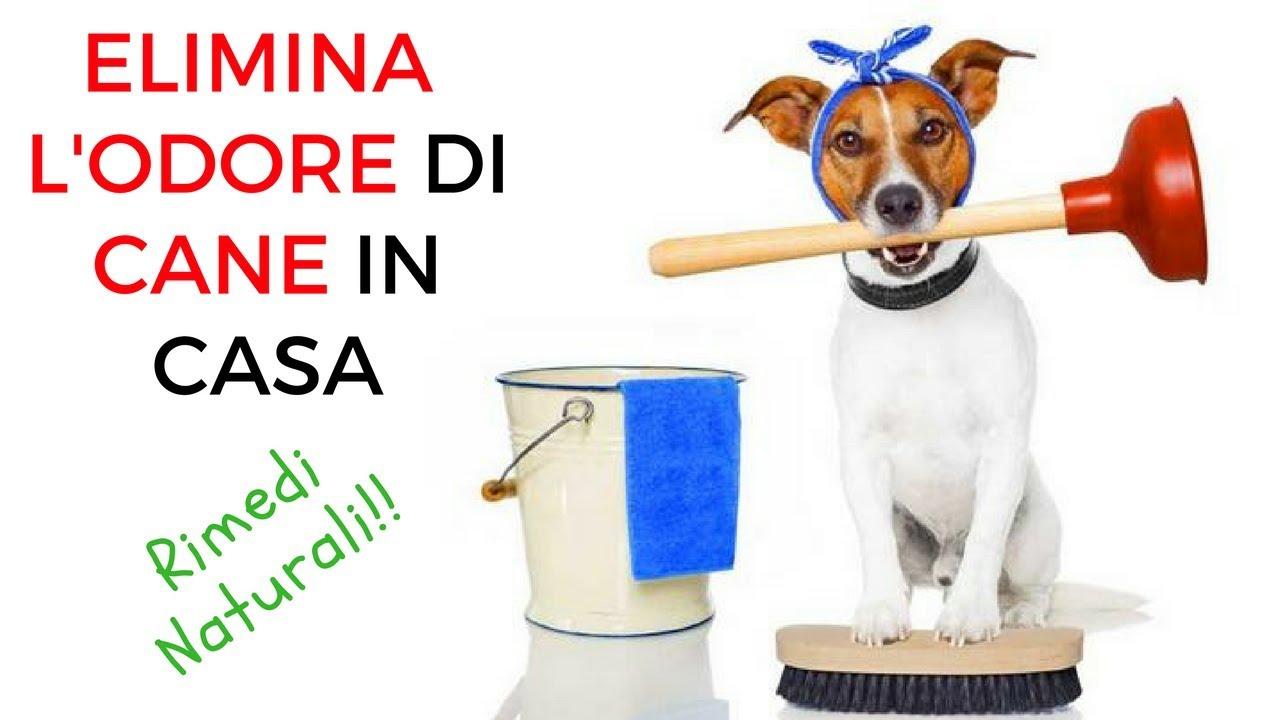 Eliminare l 39 odore di cane in casa rimedi naturali fai da - Odore di fogna in casa ...