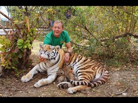 !!!         !Amur tigress gave birth !