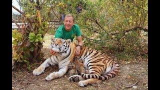 ЭКСТРЕННЫЙ  ВЫПУСК !!! Родила  амурская тигрица МЫ В ВОЛЬЕРЕ  !Amur tigress gave birth !