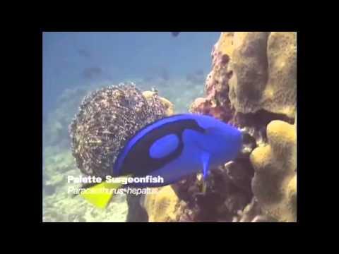Living Treasures of the Celebes Sea โดยพลตำรวจเอกอรรถพล แช่มสุวรรณวงศ์
