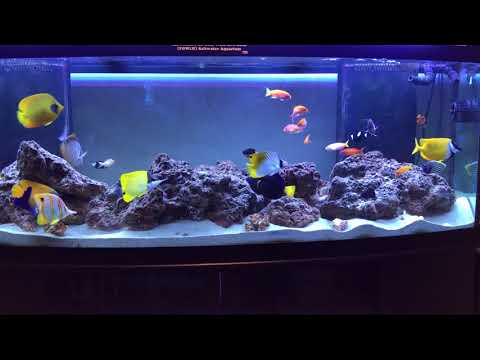 My 155 Gallon Fish Only With Live Rock (FOWLR) Saltwater Aquarium