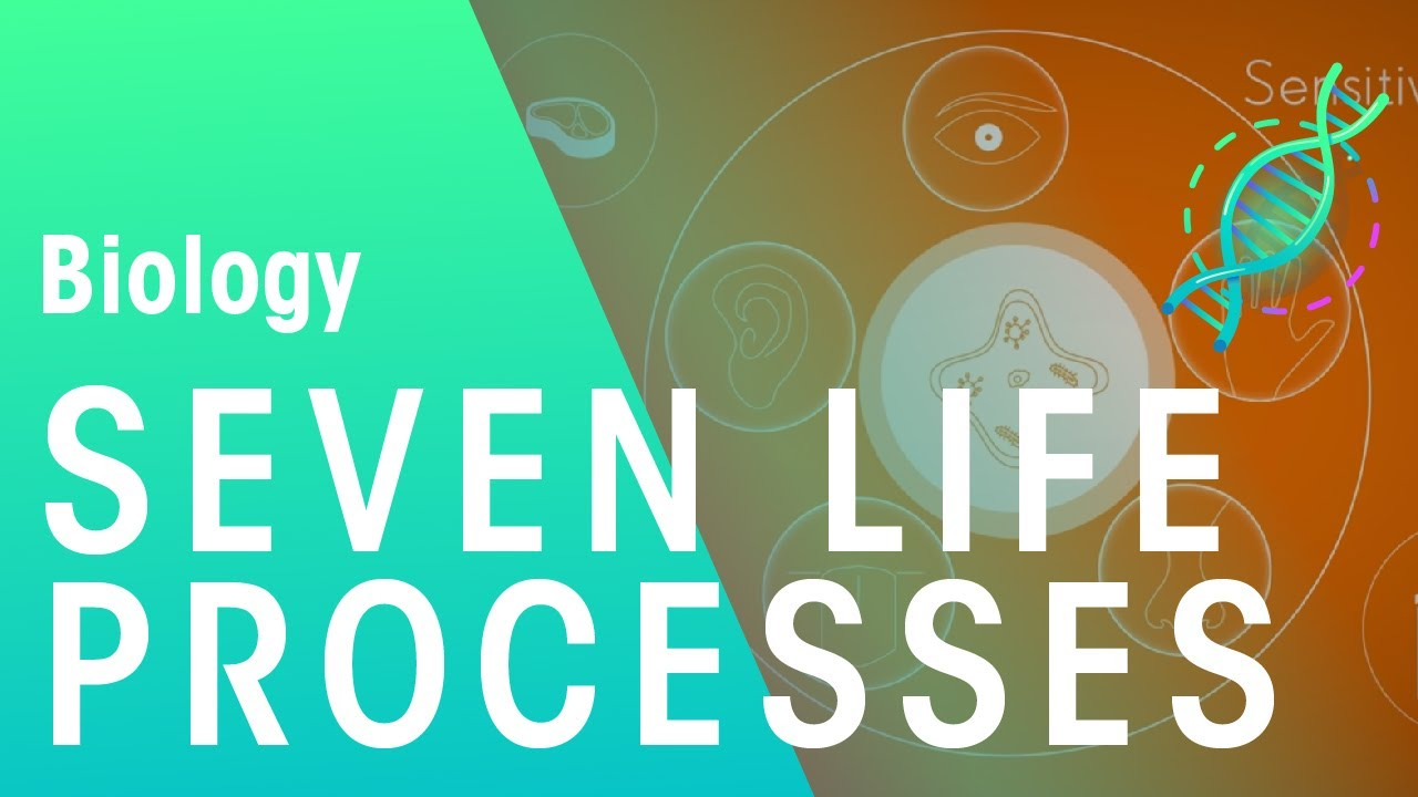 Image result for life processes font title