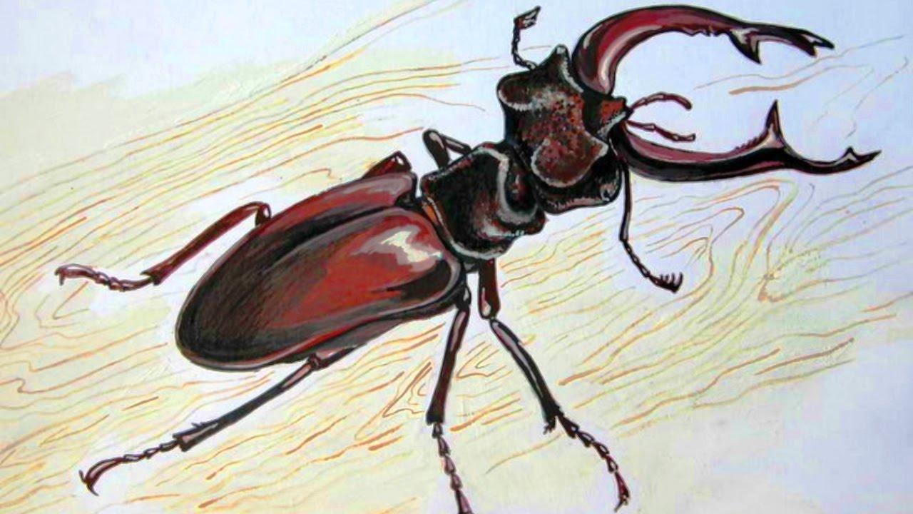 красивые рисунки жуков объявления продаже малосемейки