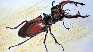 КАК нарисовать ЖУКА карандашом(КАК нарисовать ЖУКА карандашом КАК научиться РИСОВАТЬ. В этом уроке мы научимся рисовать жука карандашом...., 2015-06-14T14:44:25.000Z)