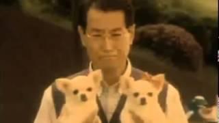 チワワが愛らしい、安田美沙子さんと清水章吾さんのアイフルのキャッシ...