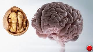 diagnosticul și tratamentul parazitului corpului uman)