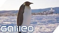 Pinguinforscher in der Antarktis | Galileo | ProSieben