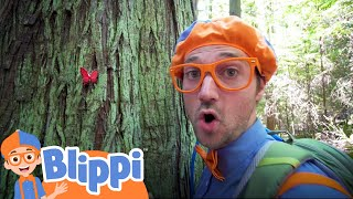 Learning Nature On A Hike With Blippi | Educational Videos For Kids