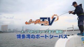 トップからディープまで痛快!博多湾のボートシーバス