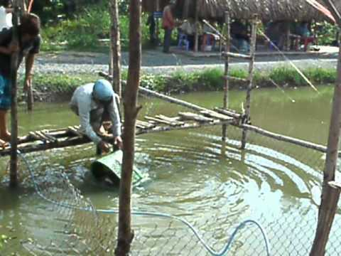 cau ca giai tri UT PHUONG Video ve TRA 26-06-2013