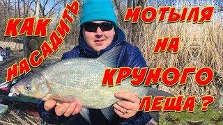 Ловля Трофейного Леща на Реке Рыбалка на Фидер Ранней Весной 2020