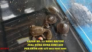 PASAR IKAN HIAS PARUNG 2019 - LAPAK NO. 117 KURA-KURA BANG HAFIDZ