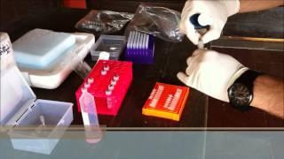 Detection of Xylella fastidiosa in field