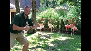 Animal Adventures with Jordan: Flamingos