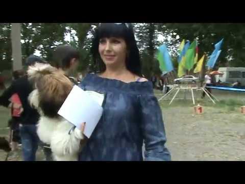"""ши-тцу юниор кобель Бони Уайт БЕСТ юниоров на выставке 05.06.2010 """"Рибо"""" Луганск."""