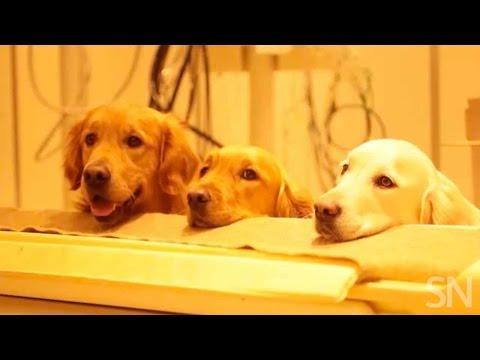 How dogs process speech | Science News