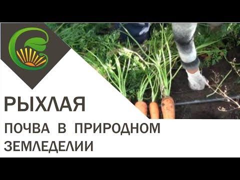 Рыхлая почва на садовом участке