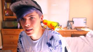 what-bird-should-i-get-as-a-pet-my-last-video-with-mango