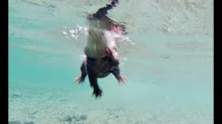 [Osmo Action] The otter swimming freely in the autumn river PartⅠ [Otter life Day 147] 秋の川を自由に泳ぐカワウソ
