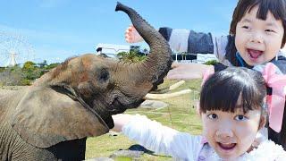 ★「キリンとゾウにおやつをあげたよ!」 in アドベンチャーワールド★Elephant and giraffe Feeding★ thumbnail