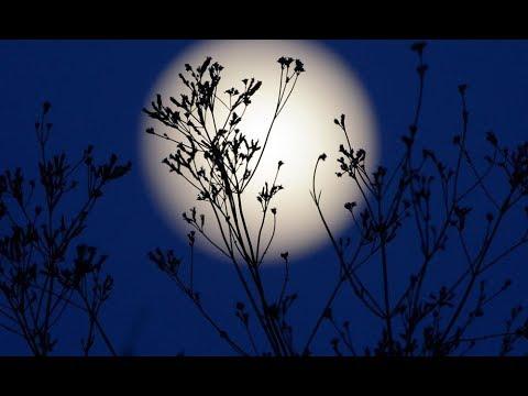 Лунный календарь на 19 ноября 2018 года