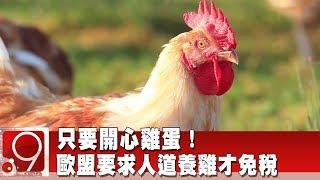 只要開心雞蛋!歐盟要求人道養雞才免稅《9點換日線》2019.10.15