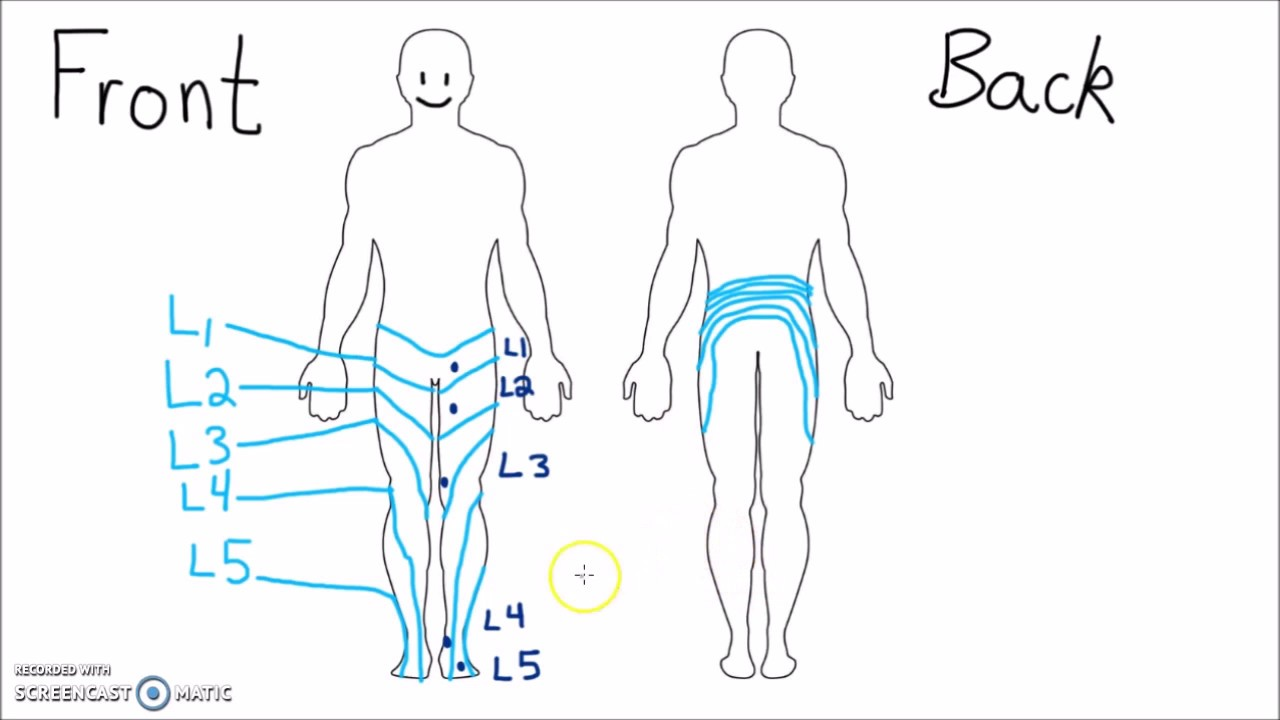 Anatomy Dermatomes Of The Lower Extremity Youtube