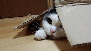 CAT-SITTING MEEMERS