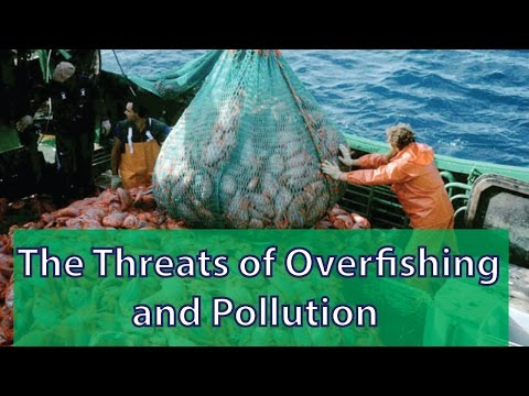 How Do Pollution And Overfishing Impact Our Oceans?